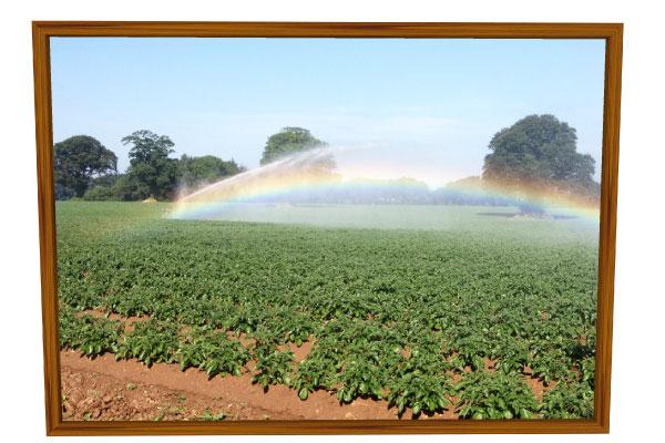 Castlecor-irrigation_3